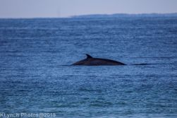 Whales_2