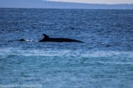 Whales_3