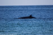 Whales_5