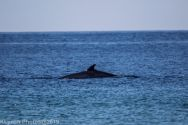 Whales_6