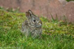 bunny_2