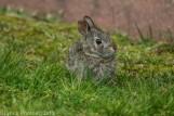 bunny_4