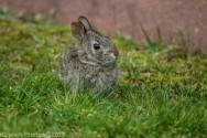 bunny_6