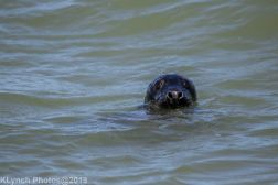 Seals_4