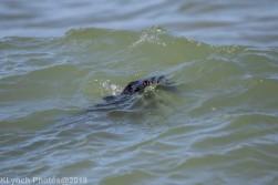 Seals_7