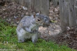 squirrel_2