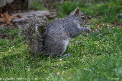 squirrel_8