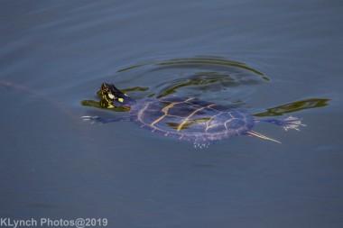 Turtles_10