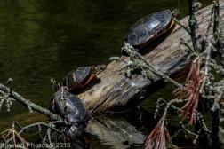 Turtles_14