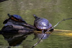 Turtles_16