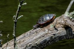 Turtles_18