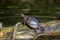 Turtles_2