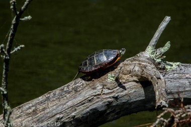 Turtles_20
