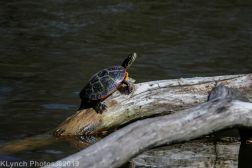 Turtles_4