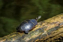 Turtles_6
