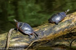 Turtles_7