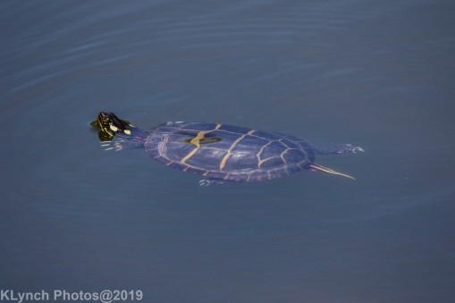 Turtles_8