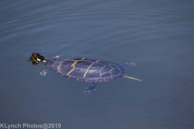 Turtles_9