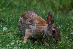 Rabbit_13