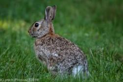 Rabbit_14