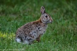 Rabbit_16