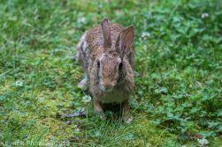 Rabbit_18