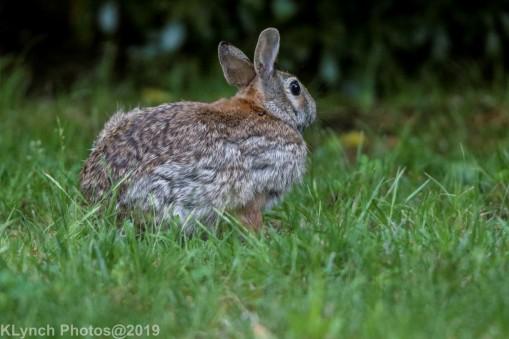 Rabbit_20
