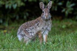 Rabbit_24
