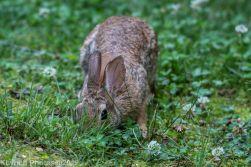 Rabbit_29