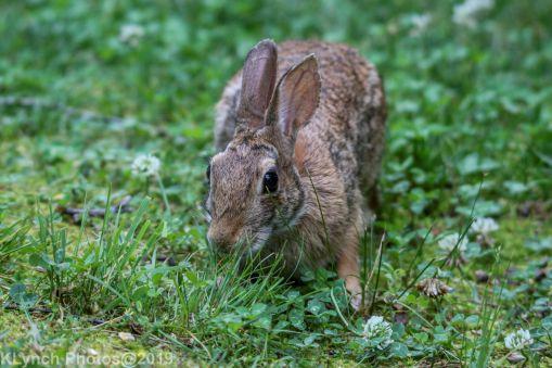 Rabbit_30