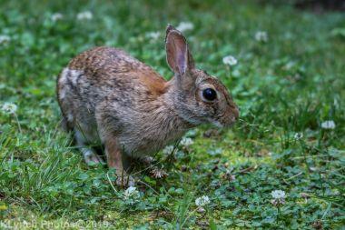 Rabbit_32