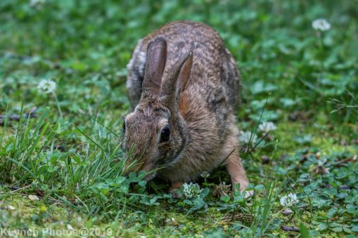 Rabbit_33