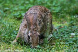 Rabbit_37