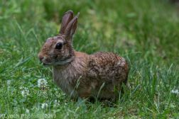 Rabbit_4