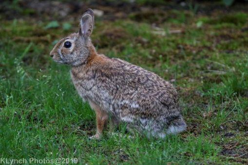Rabbit_9
