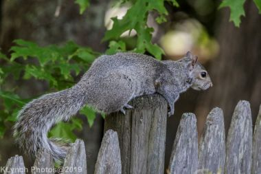 Squirrel_6