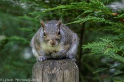 Squirrels_1