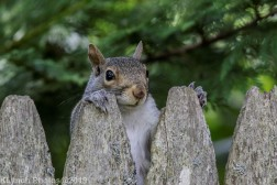 Squirrels_4