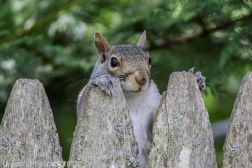 Squirrels_5