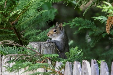 Squirrels_7