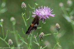 Butteryfly_1