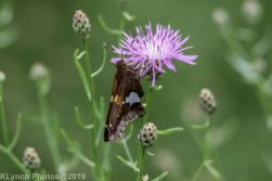 Butteryfly_2