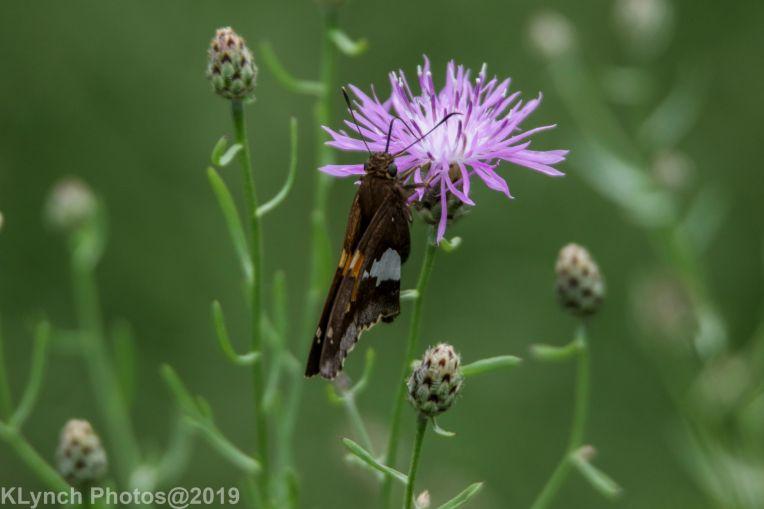Butteryfly_3