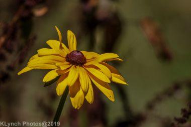 Flowers barnstable_1