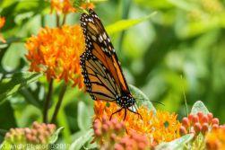 monarch barnstable_2