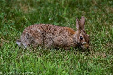 rabbit_10