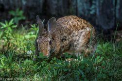 Rabbit_12