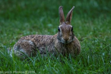 Rabbit_17