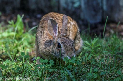 Rabbit_22