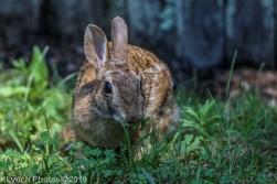 Rabbit_23
